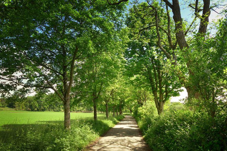 Grönt vårlandskap