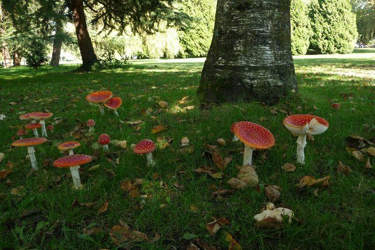 how to know you found magic mushroom