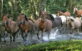 Image result for New Forest