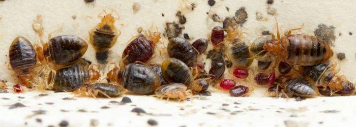 Syracuse Bed Bug Treatment