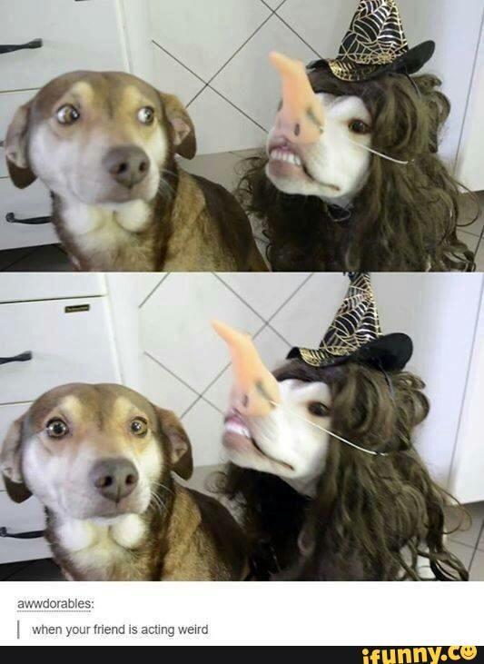 tumblr, explosionoftumblr, textpost, dog, cute