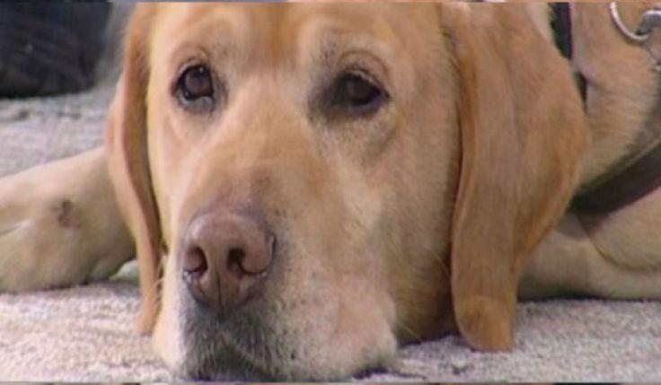 Ο σκύλος της ΕΜΑΚ που εντόπισε την 44χρονη Ειρήνη.