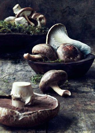 Mushrooms - photographer Rob Fiocca