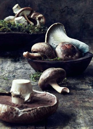 Mushrooms - photographer Rob Fiocca- I just love its Earthy and Organic feel !