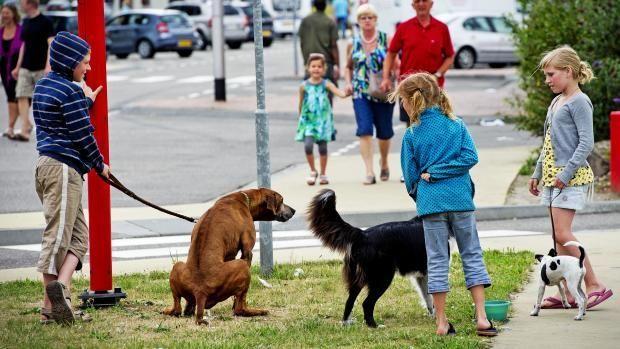 Ook hondenbezitters denken: Gadver, hondenpoep!