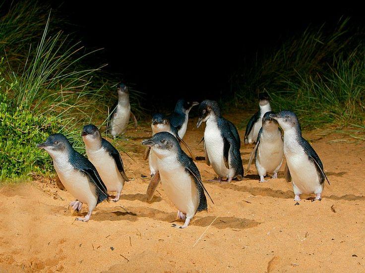 Courtesy of Visit Phillip Island