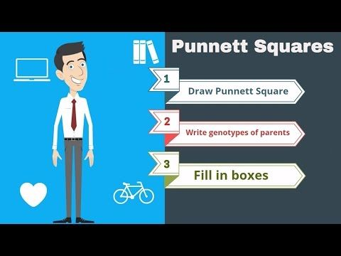 Punnett Squares the basics - YouTube