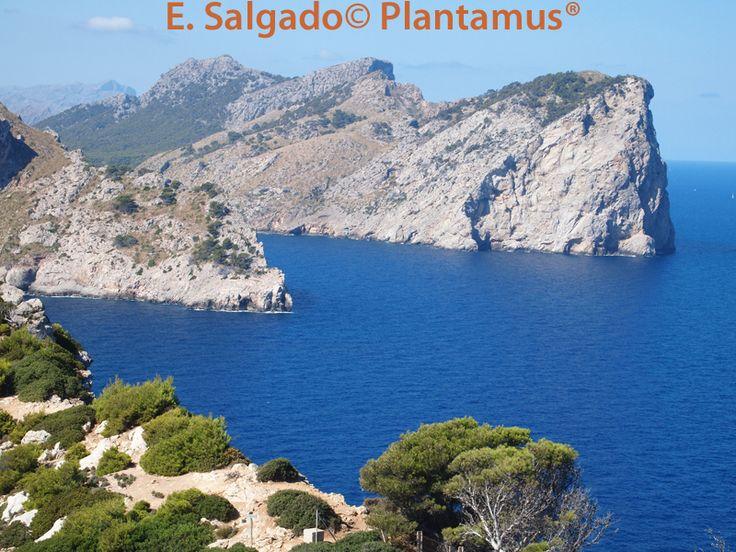 También realizamos envíos a Baleares bajo presupuesto previo del transporte, no dudes en consultarnos. http://www.plantamus.es/viveros-mallorca
