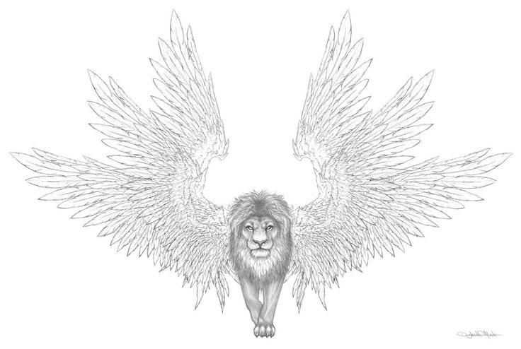 how to draw a lion with wings