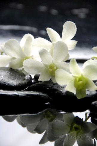 Zen Stones And Branch White Orchids With Reflection Affiche par crystalfoto sur AllPosters.fr