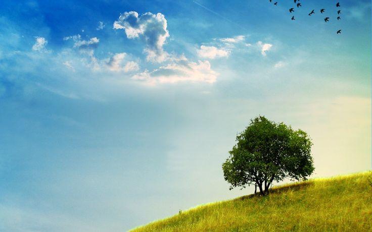 Günün birinde gökyüzünde güz mevsiminde artık esmer lekeler göremeyeceksiniz.Günün birinde yol kenarlarında toprak anamızın koyu yeşil saçlarını da göremeyeceksiniz.Bizim için değil ama,çocuklar,sizin için kötü olacak.Biz kuşları ve yeşillikleri çok gördük.   SAİT FAİK ABASIYANIK-SON KUŞLAR