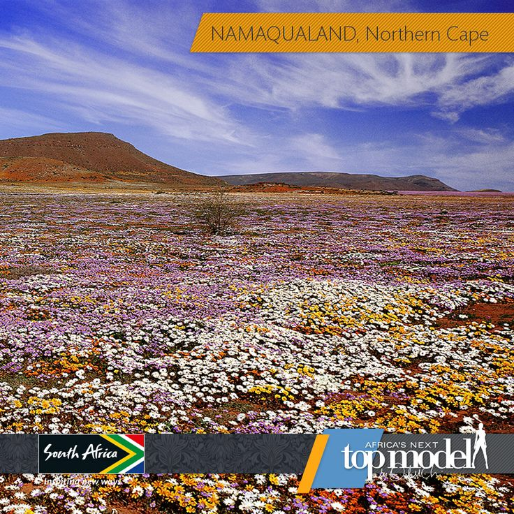 This beautiful scenery in Namaqualand in the Northern Cape is enough to brighten any blue Monday! #MeetSouthAfrica here: southafrica.net