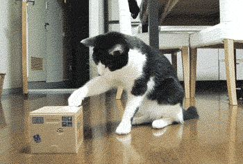 14 Funny GIFs Of Animals Confused By Technology