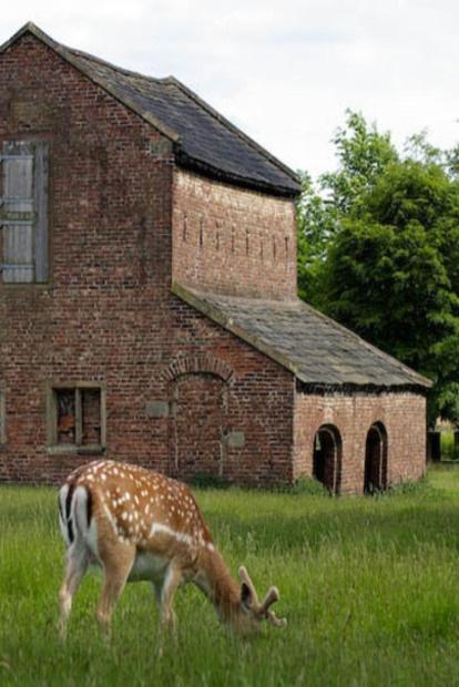 Deer In Front Of Old Brick Barn