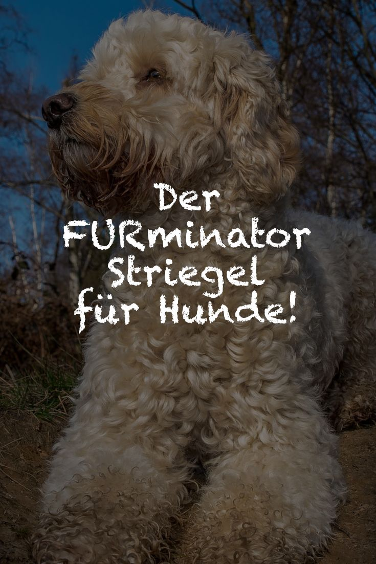 Der Furminator ist als Bürste für die Unterwolle bei vielen bekannt - aber auch der Furminator Striegel sollte in keiner Pflegekiste für den Hund fehlen.