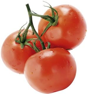 Rutgers  The legendary 'Jersey' tomato, introduced in 1934, is a cross between J.T.D. (an old New Jersey variety from the Campbell Soup Co.) and Marglobe. Its flavor, both for slicing and cooking, is still unequaled. Red fruits are slightly flattened. Tall vines, fusarium resistant.