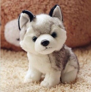 This cute Siberian Husky plush toy is the perfect gift for any Husky lover to cuddle with. Type: Plush Filling: PP Cotton Material: Cotton Size: 6.3 x 8.6in
