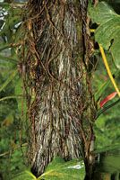 La riqueza de la biodiversidad del Chocó Biogeográfico se manifiesta en recursos alimenticios, fibras y otros materiales con los que se elab...