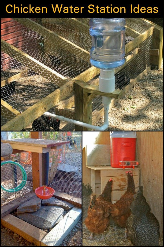 No More Overturned Containers Or Contaminated Water With These Chicken Waterer Ideas Chicken Waterer Urban Chicken Farming Chicken Diy