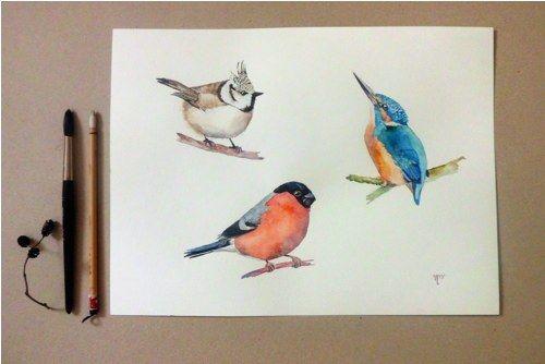 Na větvi č.3. Akvarel na A3.