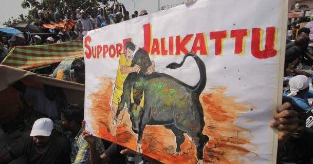 Ινδία: Ταύροι όρμηξαν και σκότωσαν 2 ανθρώπους σε φεστιβάλ -28 τραυματίες