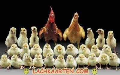 LachKaarten.com - Dieren - Tesamen op de familiefoto
