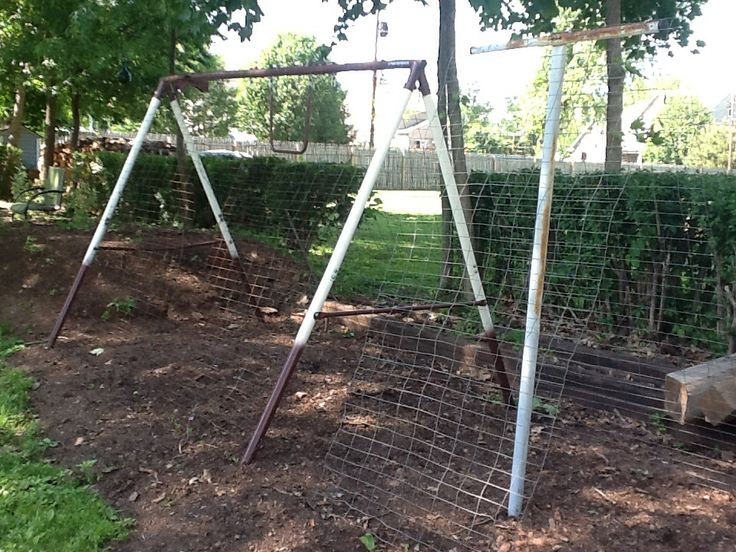 Old Swing Set Frame Turned Into Climbing Trellis For Pole