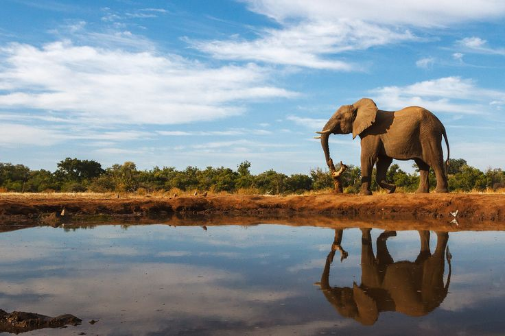 View, download, comment, and rate this 2250x1500 Elephant Wallpaper - Wallpaper Abyss