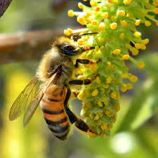 Types of bees – Types of Bees on the basis of Gender, Apiary