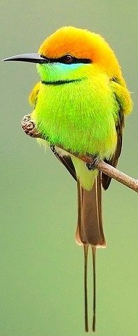 .What beautiful colors.  What type of bird do you think this is?