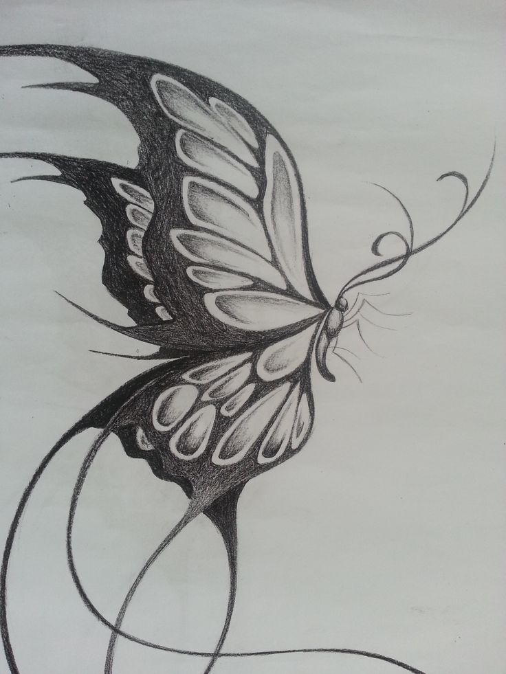 Butterfly Sketch New butterfly Drawing Pencil Pencil ...