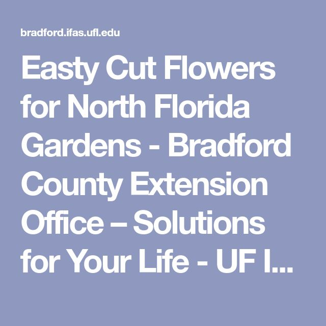 Easty Cut Flowers for North Florida Gardens - Bradford County Extension Office – Solutions for Your Life - UF Institute of Food and Agricultural Sciences
