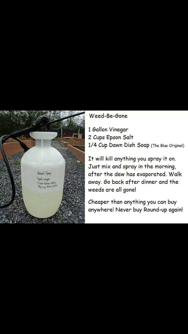 Non-Toxic Weed Spray DIY