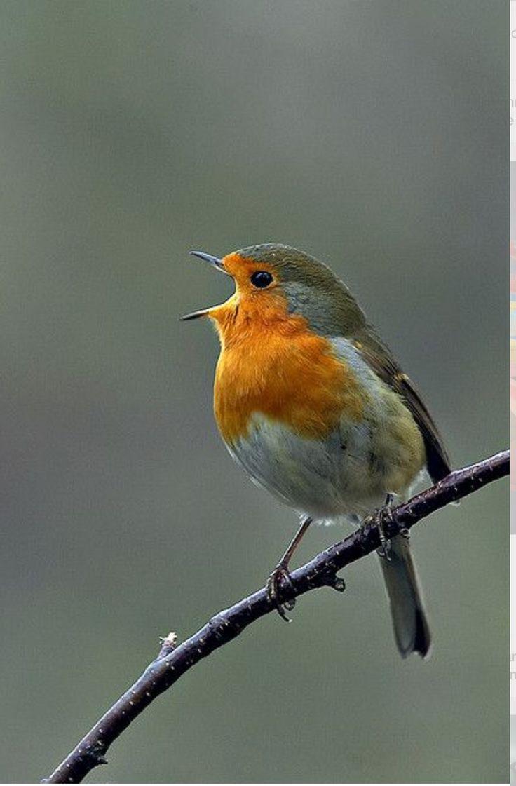 ¡Tu! ¿Otra vez por aquí? .....,cantando una canción feliz!!!