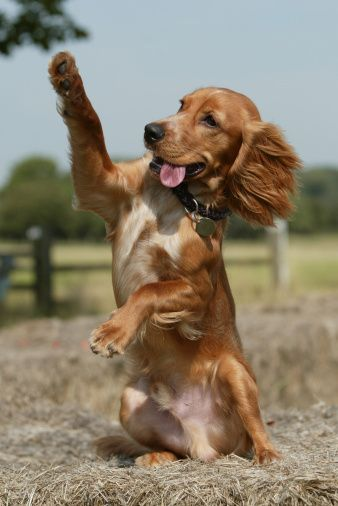 If I get a dog like this I will definitely name her Lady. ;)