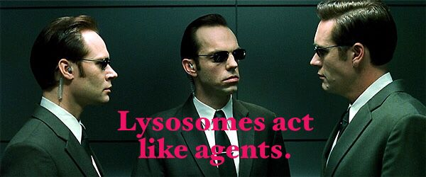 The role of lysosomes is similar to that of the agents in the movie The Matrix.