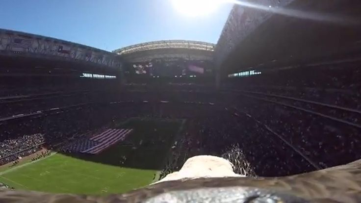 Bald eagle wearing GoPro captures incredible footage of Texans' stadium