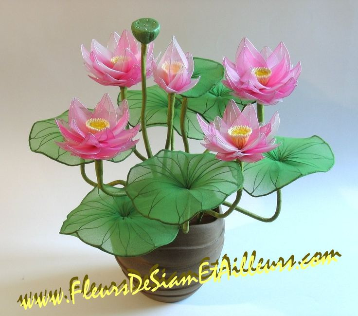 PHOTO ONLY ~ 5 Lotus roses