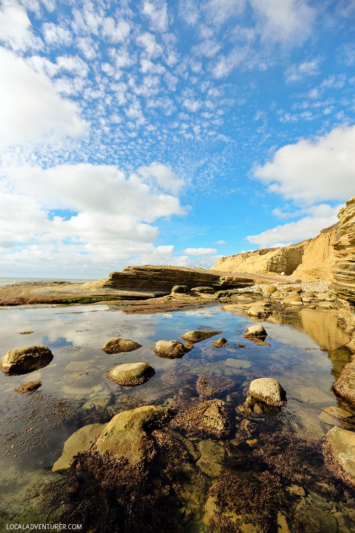 San Diego Tide Pools at Cabrillo National Monument - look for sea stars, lobster, octopus, and more when the tide goes out in San Diego // localadventurer.com