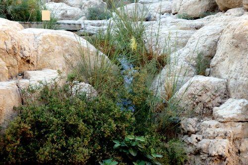 Oasis de Ein Guedi, Israel.