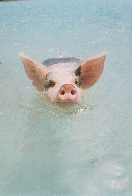 Take Me Away - When Pigs Swim