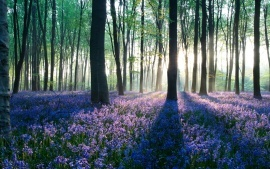 Spring Deciduous Dawn in Forest Surrounded HD & Widescreen Nature & Landscape Wallpaper from the above resolutions. If you don't find the exact resolution you are looking for, then go for 'Original' or higher resolution which may fits perfect to your desktop.