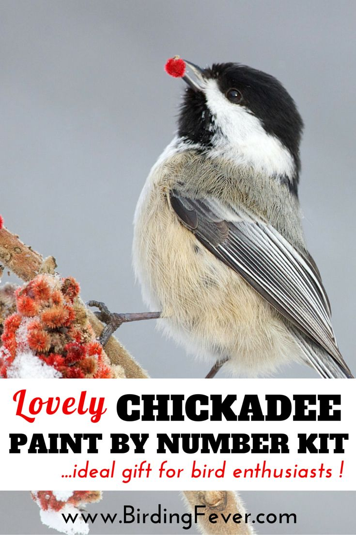 Bird crafts. Beautiful chickadee paint by number kit for adults. Wonderful gift idea! Check it out: http://www.birdingfever.com/lovely-bird-paint-by-numbers-kit-for-bird-enthusiasts/