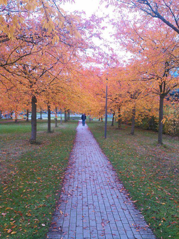 Lille à l'automne