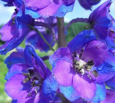 juli verjaardag bloemen betekenis