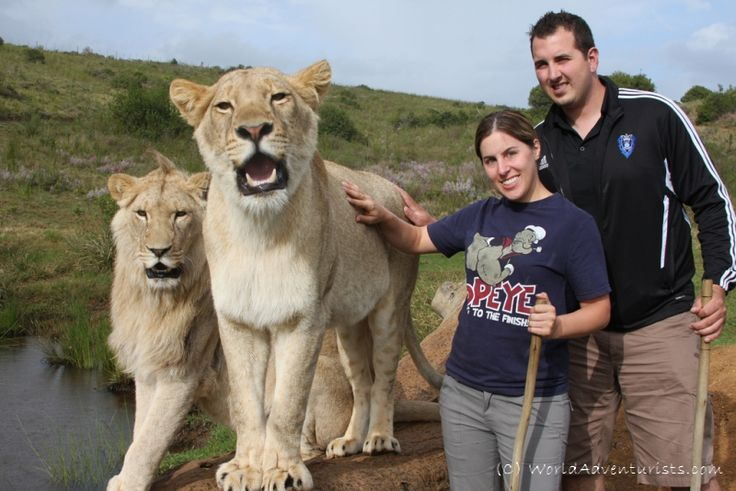Walking With Lions - South Africa