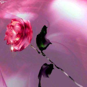 Imagenes De Rosas Hermosas Para Descargar Gratis