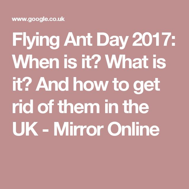 New Flying Ant Day When is it What is it And how to