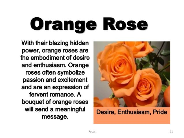 143 Best Images About Rose On Pinterest Flowers