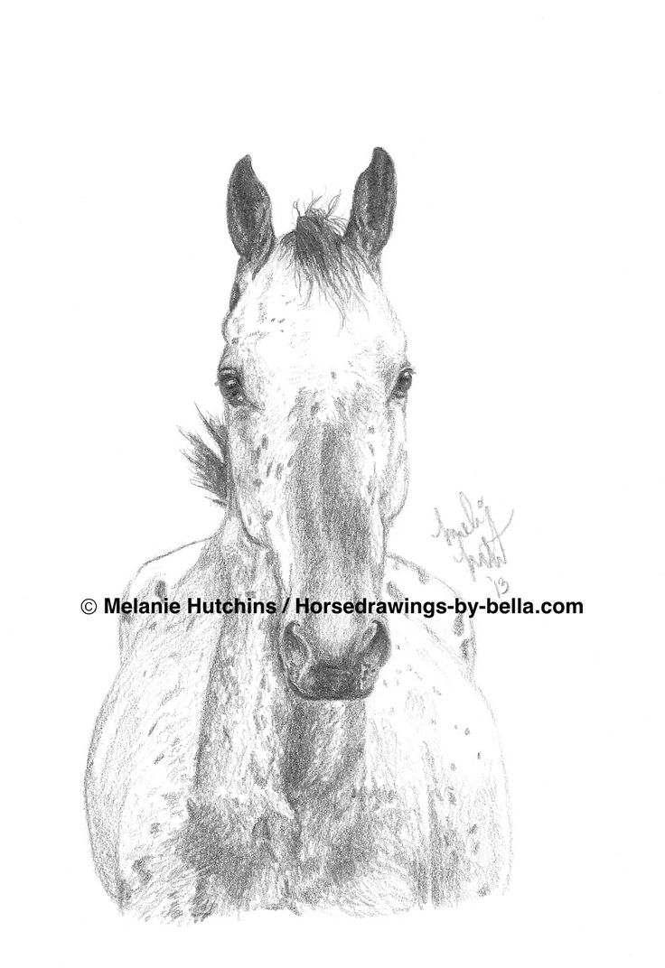 Portrait of Bubbles.  Copyright Melanie Hutchins / horsedrawings-by-bella  Follow me on Facebook: https://www.facebook.com/Horsedrawingsbybella.MelanieHutchins Twitter: https://twitter.com/MelHTheArtist YouTube: https://www.youtube.com/channel/UCZDEjNKuowAo92BhnMWWBzA